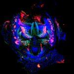 © Olga Nagy – Institute Jacques Mondod, CNRS, Drosophila Evolution Group - ImagoSeine