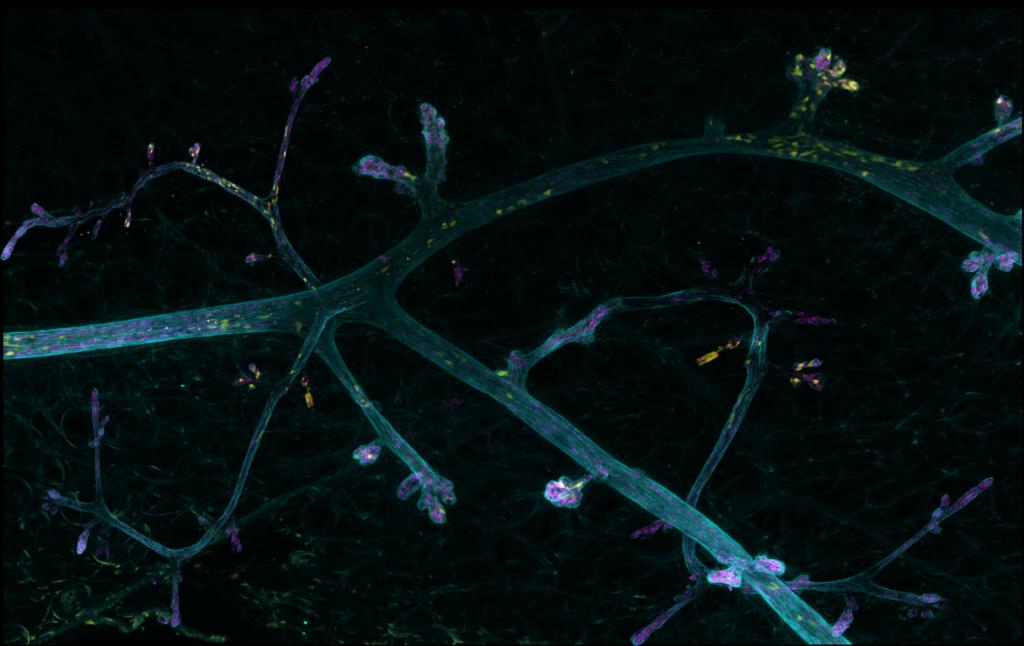La petite Venise de la biologie © Carine Rossé, Emilie Lagoutte & Marie Irondelle, Institut Curie